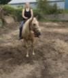 Wildhorse99